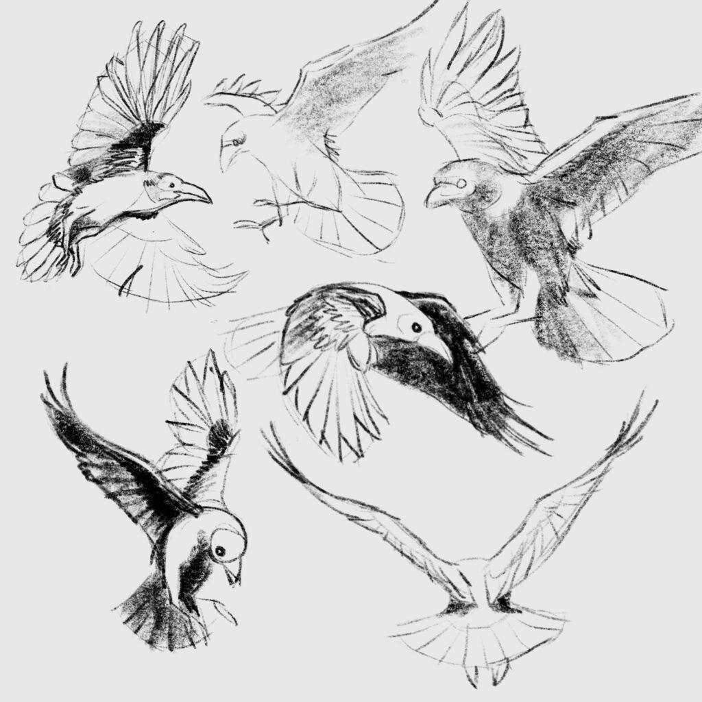 Skizzen von Raben im Flug